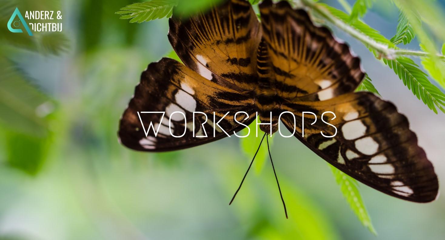 Workshops Anderz en Dichtbij